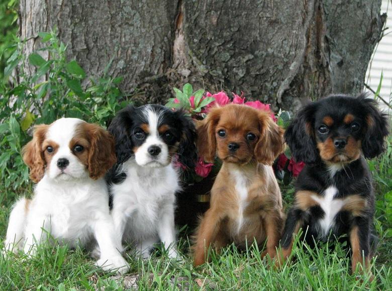 Породистые собачки