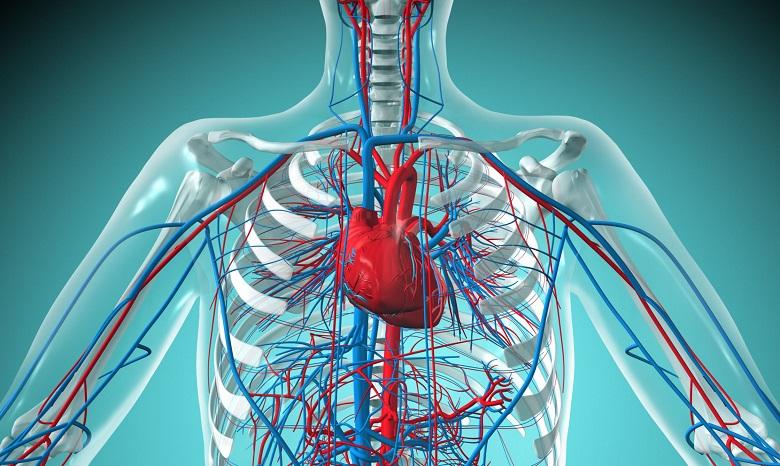 Болезни системы кровообращения
