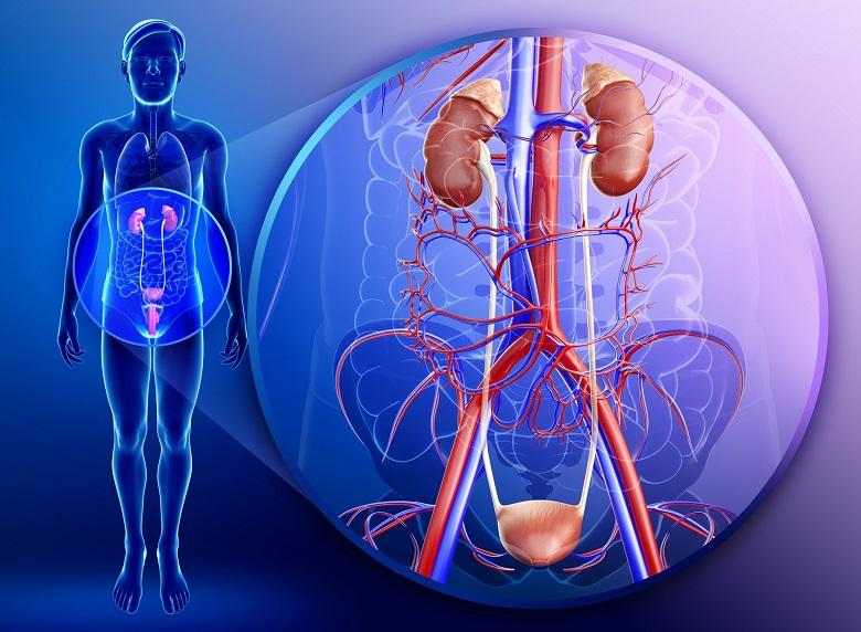 Заболевания мочевой системы
